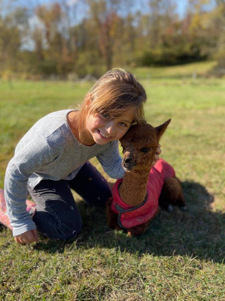 child and alpacas