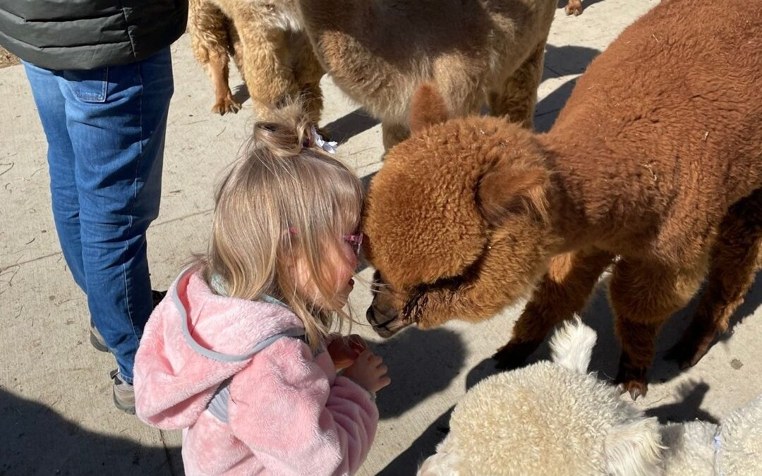 National Alpaca Farm Days 2021!